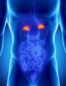 adrenal glands tulsa adrenal fatigue