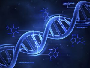 genetic expression