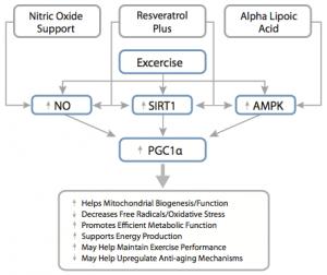 PGC1a Diagram to stimulate mitochondrial biogenesis