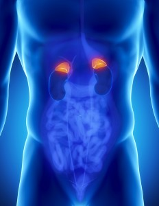 adrenal glands tulsa adrenal fatigue