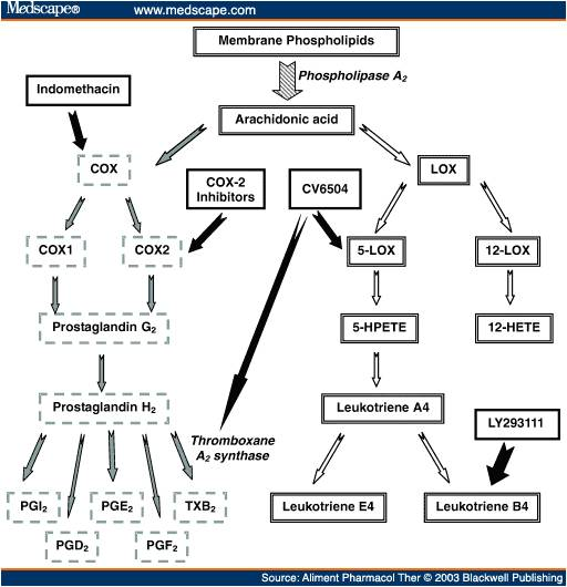 nsaid pathway diagram wiring diagram z4 rh 2 bbght biologiethemenabitur de