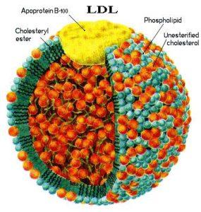 Cholesterol ApoB functional medicine